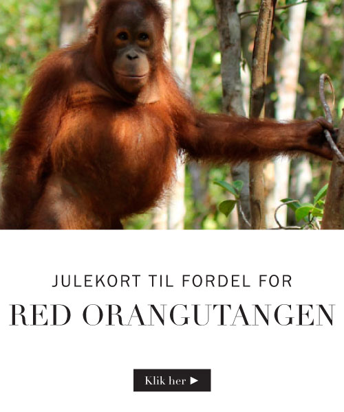 Julekort til fordel for red orangutangen